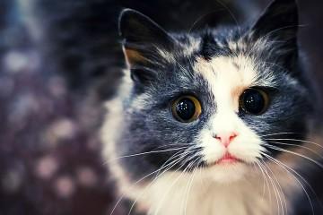 com és que arrasen els vídeos de gats a internet?